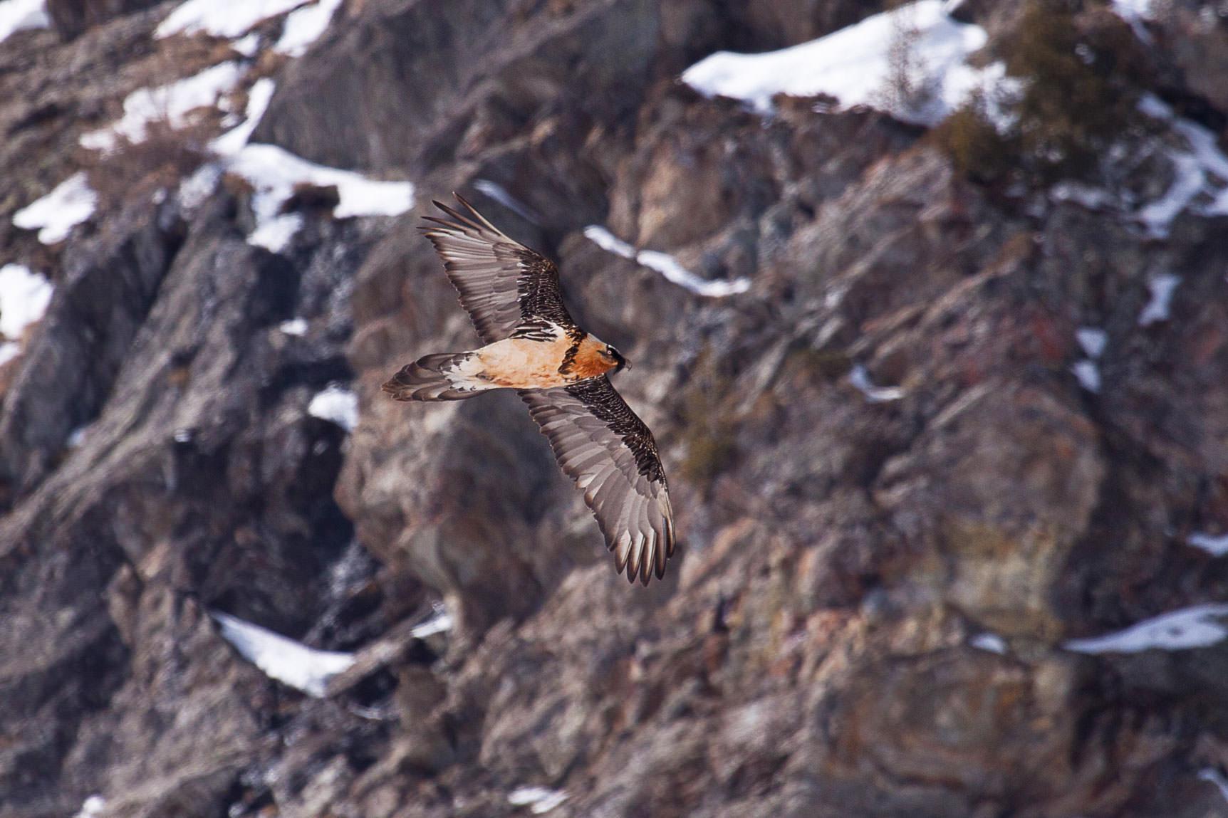 Birdwatching - Guide Trek Alps - Viaggi Natura nel Mondo