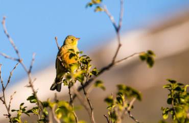 Birdwatching sulle Alpi  - Guide Trek Alps - Viaggi Natura nel Mondo