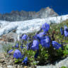 Fauna e Flora - Guide Trek Alps - Viaggi Natura nel Mondo