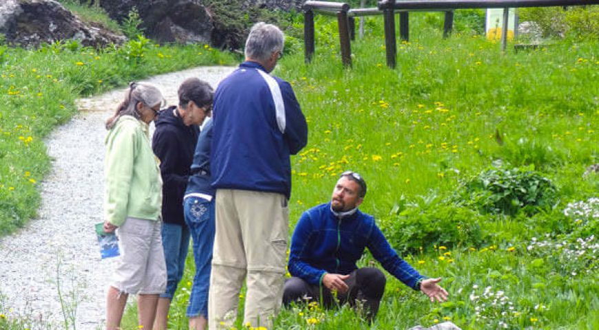 Roxy - UK -  Guide Trek Alps - Viaggi Natura nel Mondo