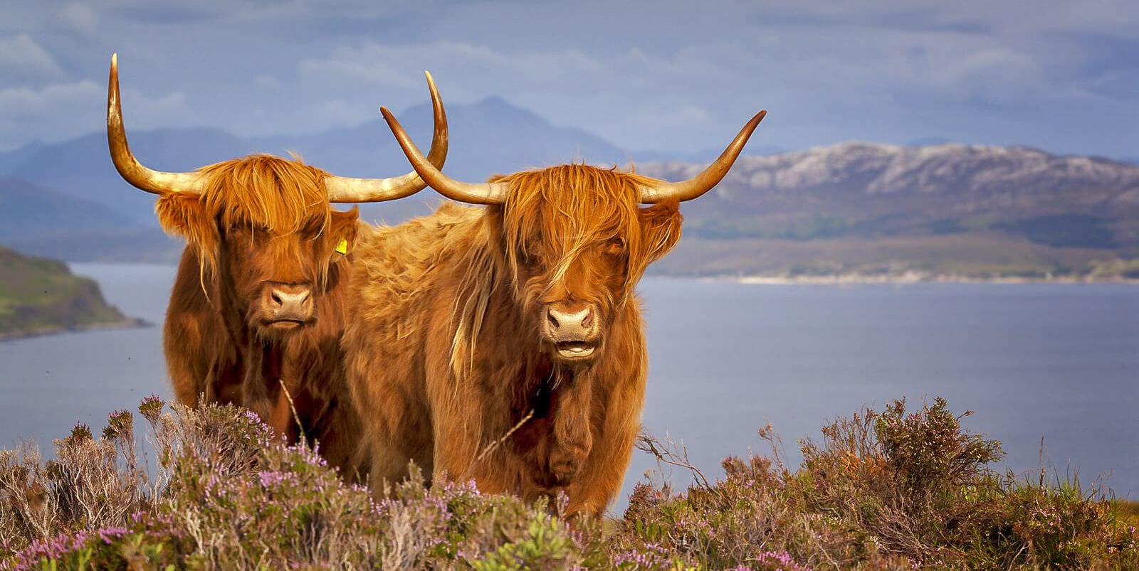 Scozia - Guide Trek Alps - Viaggi Natura nel mondo