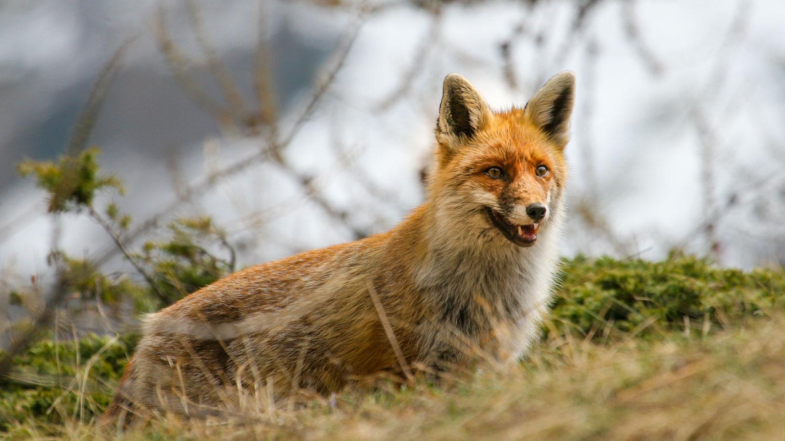 wildlife-tour - Guide Trek Alps - Viaggi Natura in Mondo