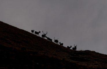 Il Bramito del Cervo  - Guide Trek Alps - Viaggi Natura nel Mondo