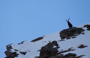 Ciaspolata - Guide Trek Alps - Viaggi Natura nel Mondo