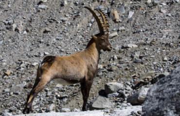 A piedi nel Paradiso - Guide Trek Alps - Viaggi Natura nel Mondo