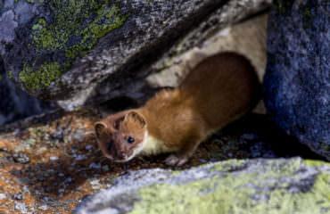 A piedi nel Paradiso - Guide Trek Alps - Viaggi Natura nel Mondo-8