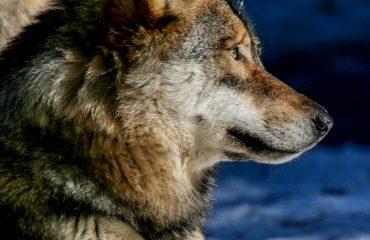 Anello del Lupo - Guide Trek Alps Viaggi Natura nel Mondo