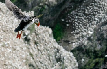 Learn English with Puffin - Guide Trek Alps - Viaggi in natura nel mondo
