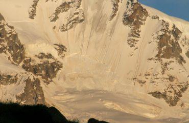 Gallo Forcello - Guide Trek Alps – Viaggi in Natura nel Mondo