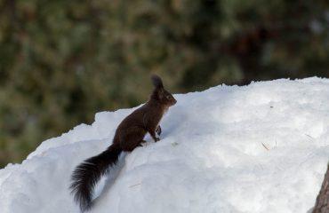 Il risveglio della Natura - Guide Trek Alps - Viaggi in Natura nel Mondo