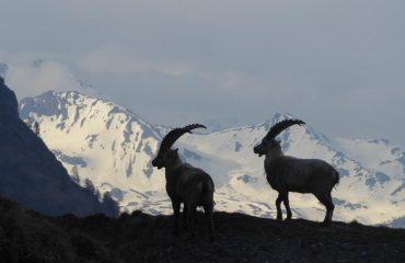 Weekend Paradiso - Guide Trek Alps