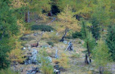 Scozia - Guide Trek Alps - Viaggi in Natura nel Mondo