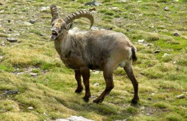 Trekking al piedi del Monte Bianco - Guide Trek Alps - Viaggi in Natura nel Mondo