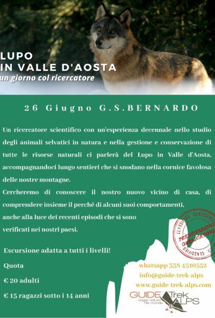 Lupo - Guide Trek Alps - Viaggi Natura in Mondo