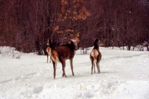 Lolita Bizzarri - Guide Trek Alps - Viaggi Natura in Mondo
